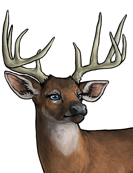 Whitetail Deer Bust